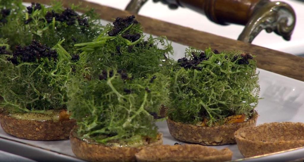 Skogspaj med myror och renlav (skärmdump från Go'kväll SVT)