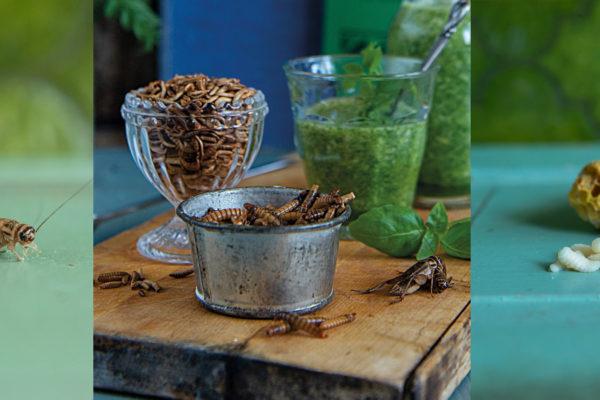 Bilder från boken Äta insekter. Fotograf: Jonas Larsson