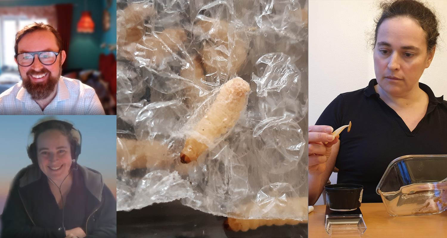 We had a great interview/meeting where Nathalie Berezine talked about the insect eating Giant Wax Moth. In the middle a photo of a larvae eating plastic and to the right Nathalie weighing larvae (photo 2,3: Norbite)